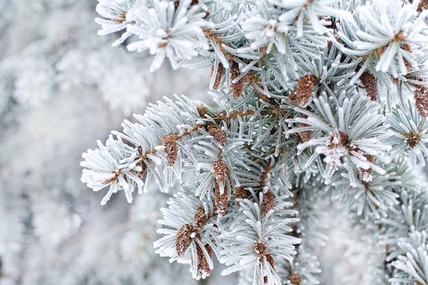 Fond d'hiver. un conifère dans la gelée blanche et la neige Photo Premium