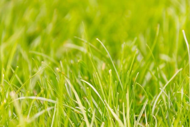 Fond macro d'herbe verte fraîche Photo Premium