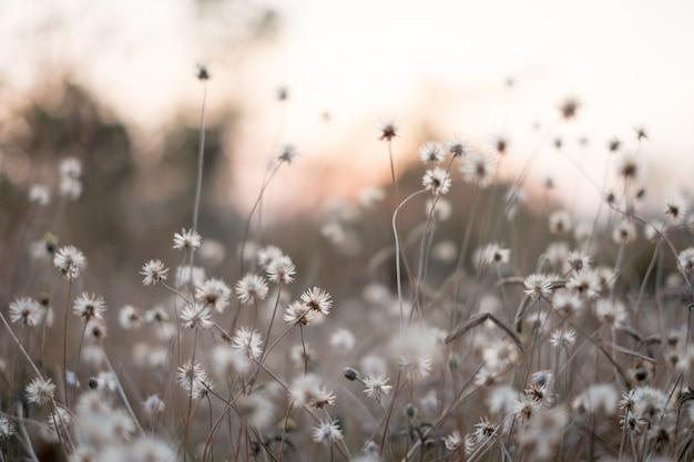 Fond avec les mauvaises herbes et magie de la lumière au crépuscule en automne. le coucher du soleil. Photo Premium