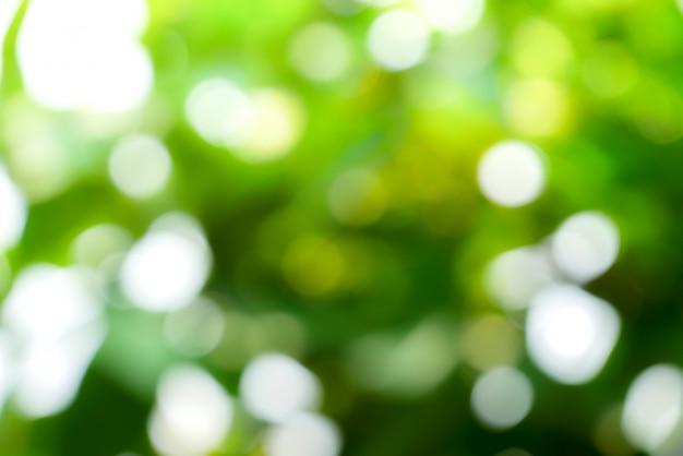 Fond de nature verte abstraite ensoleillée, parc de flou avec la lumière de bokeh, nature, jardin, saison de printemps et d'été Photo Premium