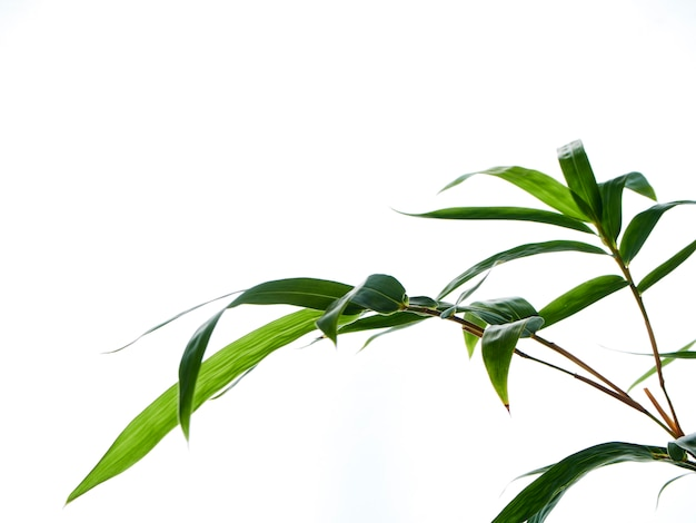 Fond naturel asiatique avec du bambou Photo Premium