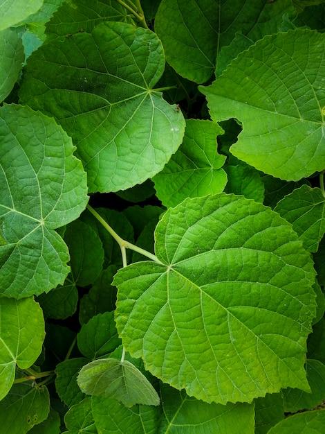 Fond naturel de feuilles vertes Photo gratuit