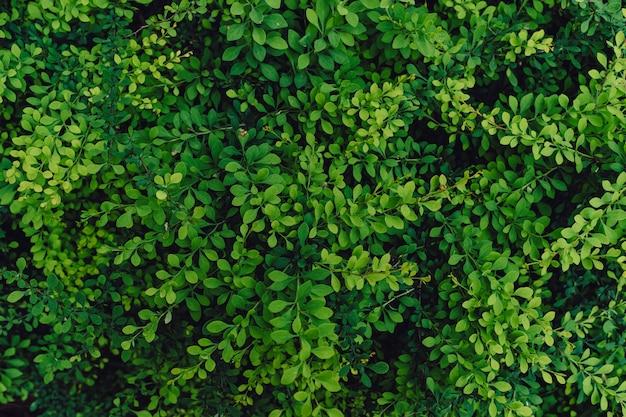Fond Naturel Texturé De Nombreuses Feuilles Vertes Photo gratuit