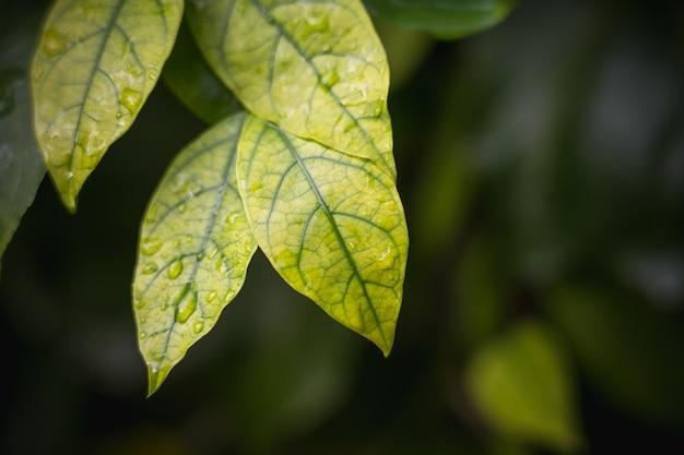 Fond naturel de vert clair style abstrait flou de feuille de plantes Photo Premium