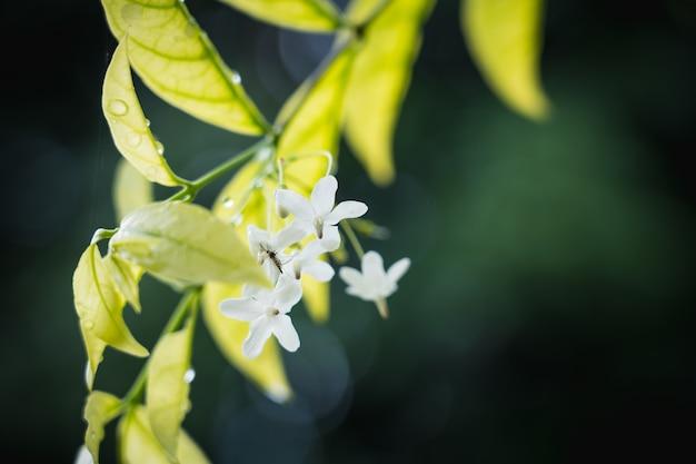 Fond naturel de vert clair style abstrait floue de feuille de plantes et petit moustique sur une fleur blanche Photo Premium