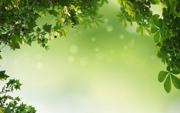 Fond naturel vert, fond de verdure Photo Premium