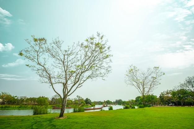Fond de paysage arbre en forme de coeur. Photo Premium