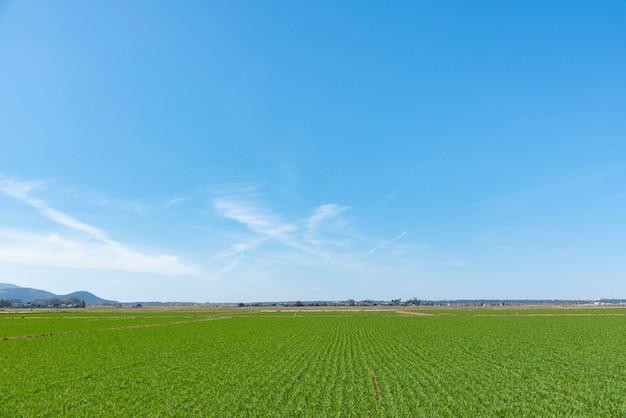 Fond de paysage pour l'été, ciel bleu et beau nuage Photo Premium