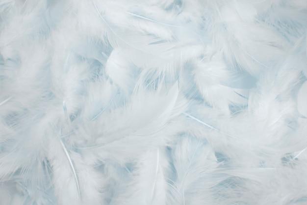 Fond de plumes blanches. Photo Premium