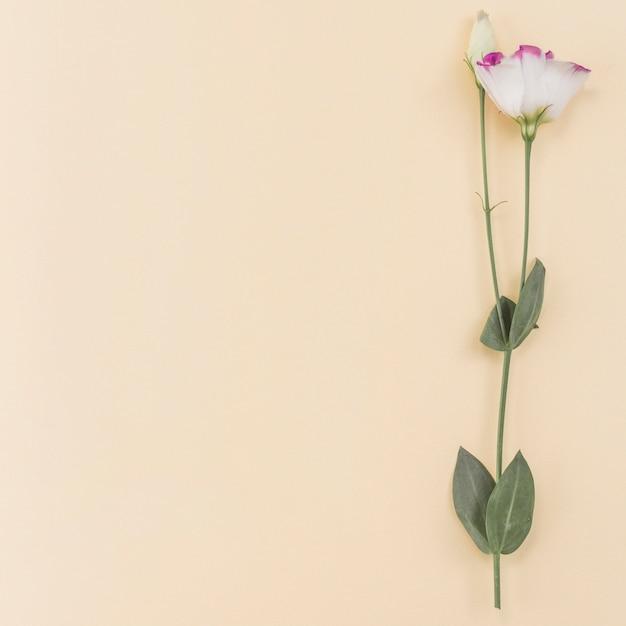 Fond romantique avec fleur Photo gratuit