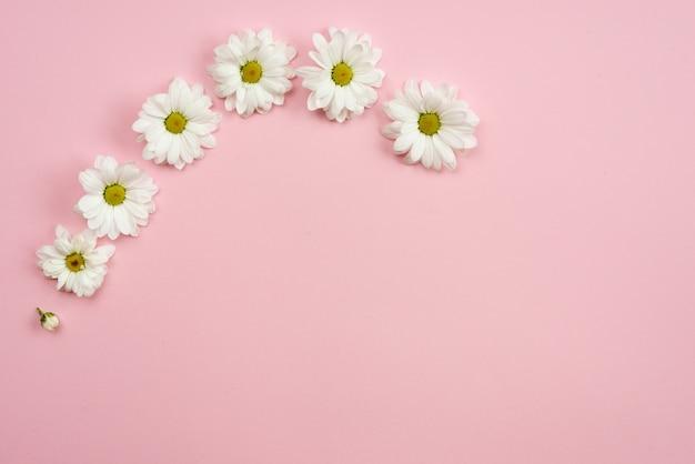 Fond Rose Minimaliste Avec Des Têtes De Camomille Et Espace Copie. Motif De Printemps. Photo Premium