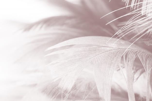 Fond de texture belle plume blanc-brun Photo Premium