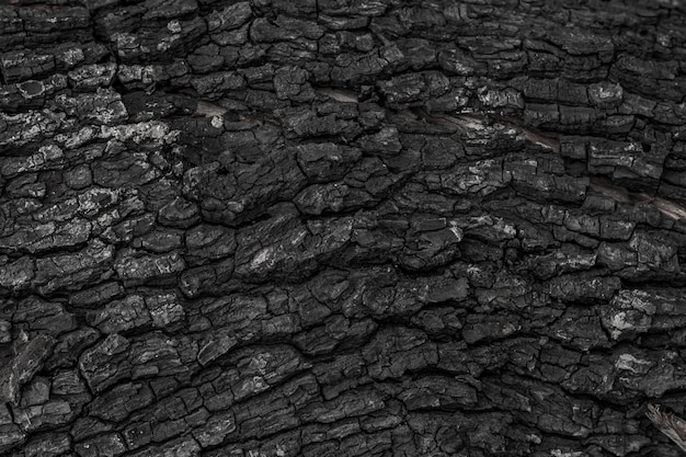 Fond de texture en bois brûlé Photo Premium