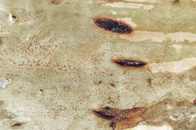 Fond de texture de bois naturel Photo gratuit
