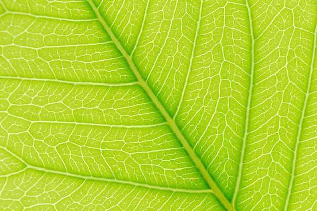 Fond de texture de feuille verte Photo Premium