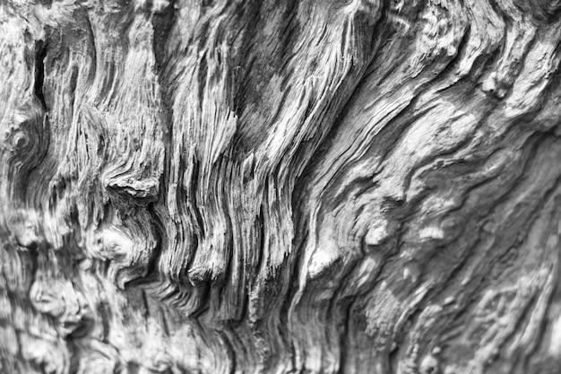 Fond de texture organique de bois flotté pourri. Photo Premium