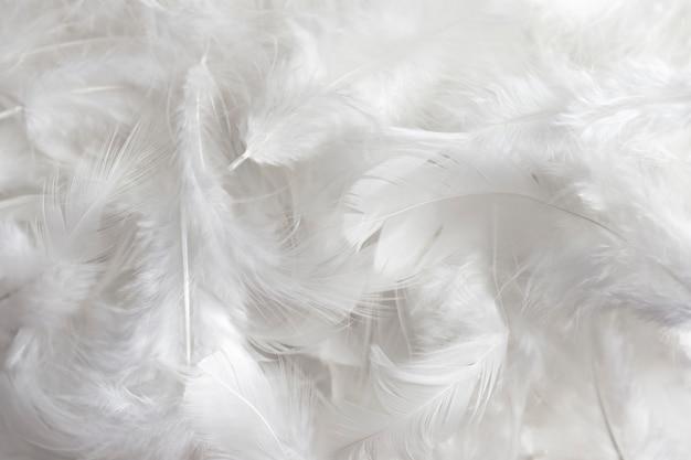 Fond de texture de plume blanche. Photo Premium