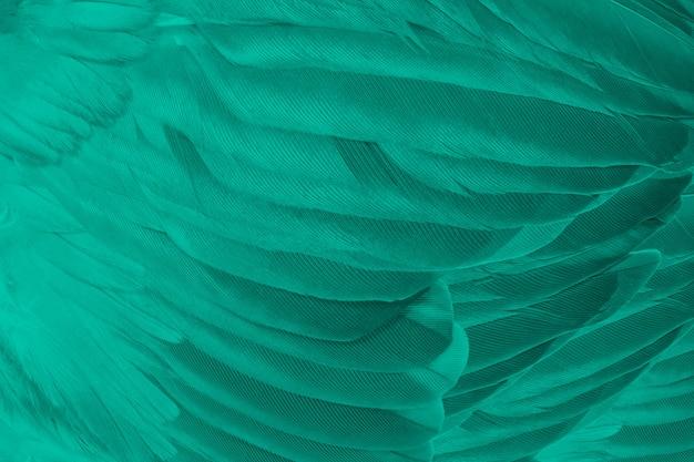 Fond de texture de plume turquoise vert Photo Premium