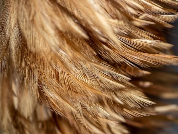 Fond De Texture Plumeau. Photo Premium