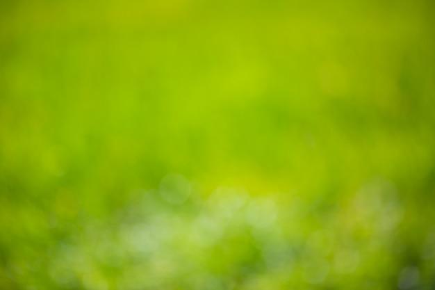 Fond vert nature floue défocalisé avec lumières tamisées bokeh. Photo Premium