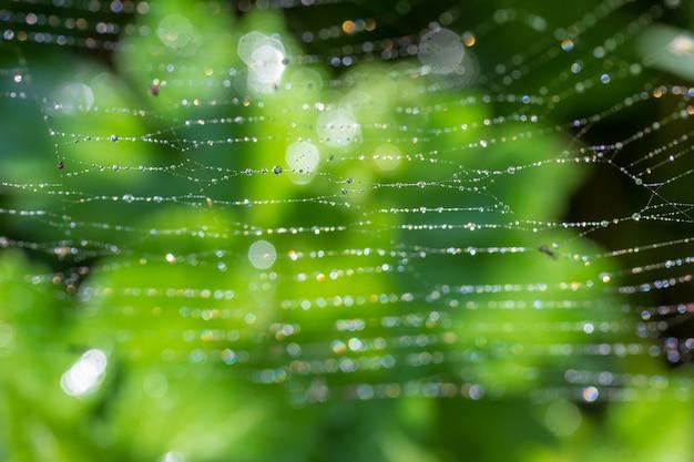 Fond vert avec la rosée du printemps ou l'été sur une toile d'araignée Photo Premium