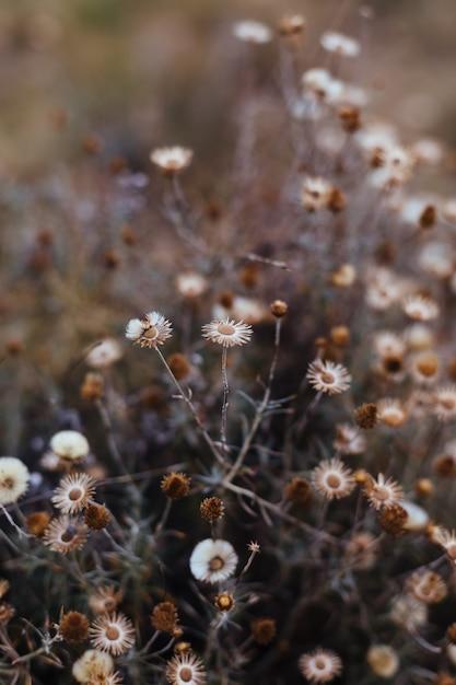 Fondo de plantes et fleurs de bosque. Photo Premium