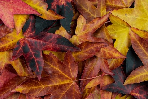 Fonds d'arrière-plan d'automne, feuilles colorées en chute. vue grand angle. Photo Premium