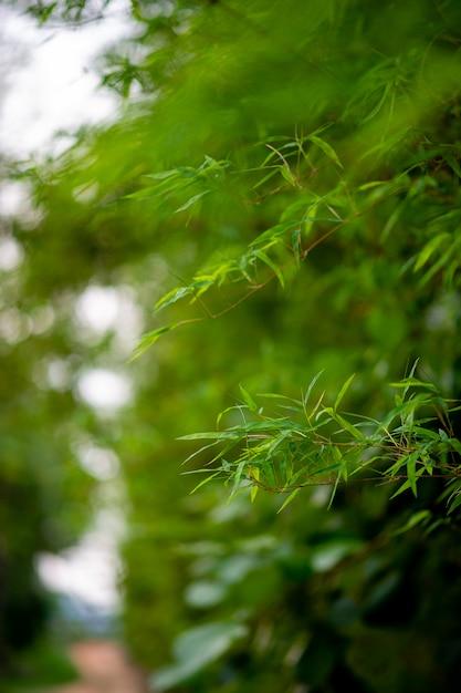 Forêt D'arbres De Bambou Vert Photo Premium