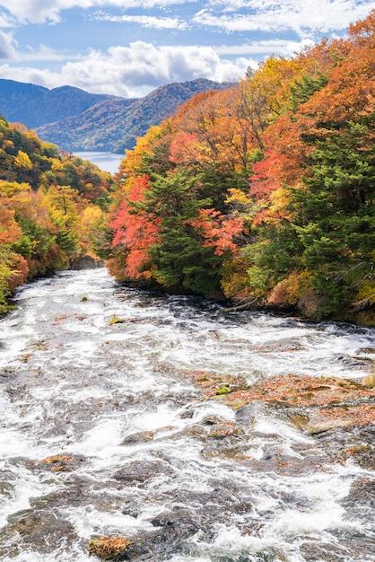 Forêt d'automne automne nikko japon Photo Premium