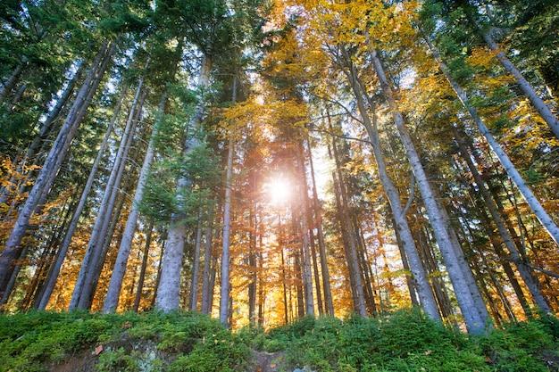Forêt d'automne par une journée ensoleillée Photo Premium