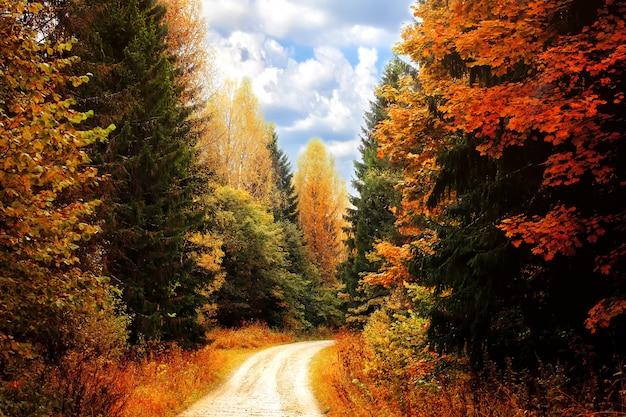Forêt d'automne. route parmi les arbres d'automne Photo Premium