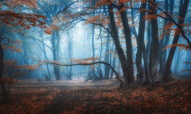 Forêt D'automne Sombre Mystique Avec Sentier Dans Le Brouillard Bleu. Paysage Avec Des Arbres Enchantés Avec Des Feuilles D'oranger Sur Les Branches. Photo Premium