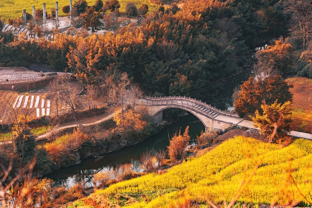 Forêt d'automne avec vieux pont Photo Premium