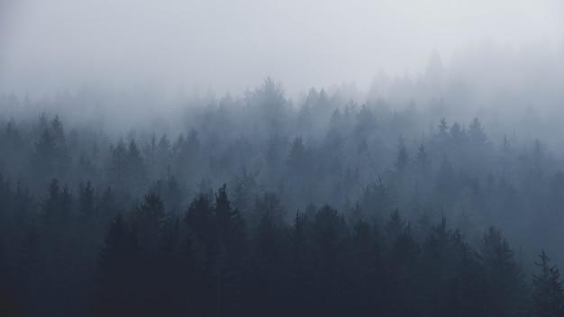 Forêt brumeuse dans les montagnes Photo Premium