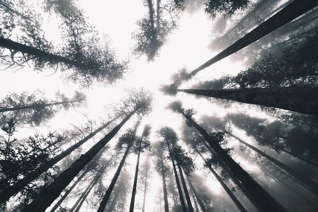 Forêt brumeuse en hiver avec des arbres Photo Premium