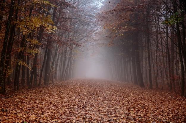 Forêt Brumeuse Photo Premium