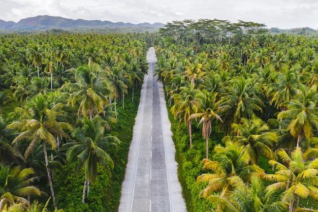 Forêt De Cocotiers Tropicaux Photo Premium