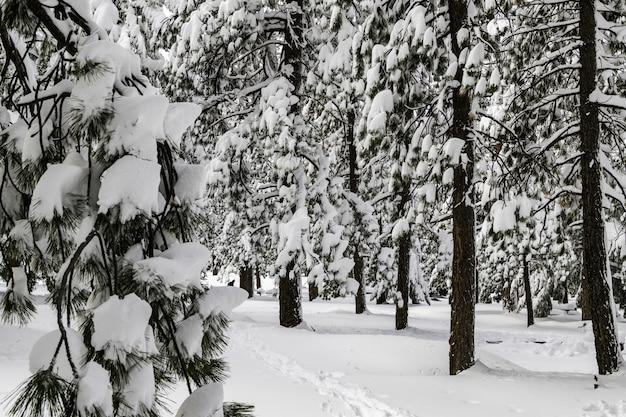 """Résultat de recherche d'images pour """"arbres recouverts de neige"""""""