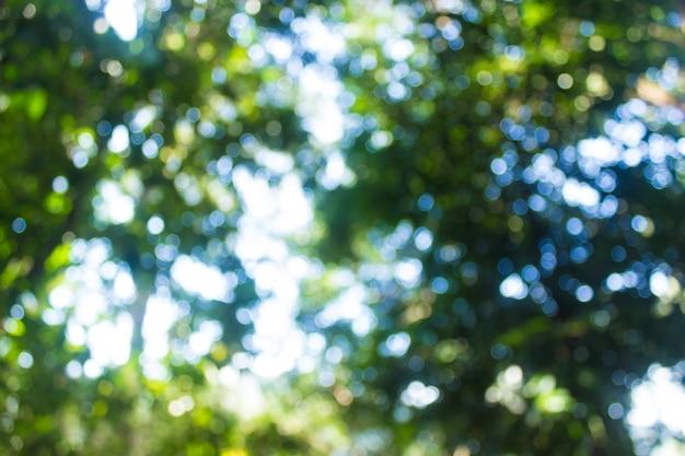 Forêt de flou abstrait avec fond de soleil bokeh. Photo Premium