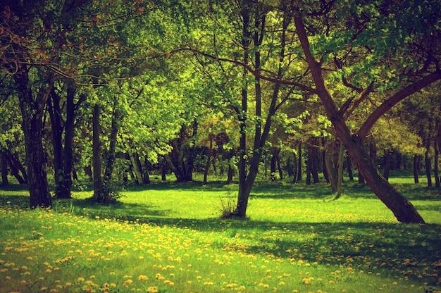 Forêt avec de l'herbe Photo gratuit