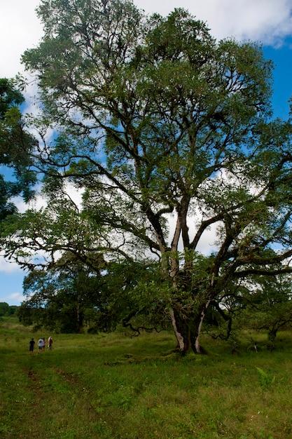 Forêt, île de santa cruz, îles galapagos, équateur Photo Premium