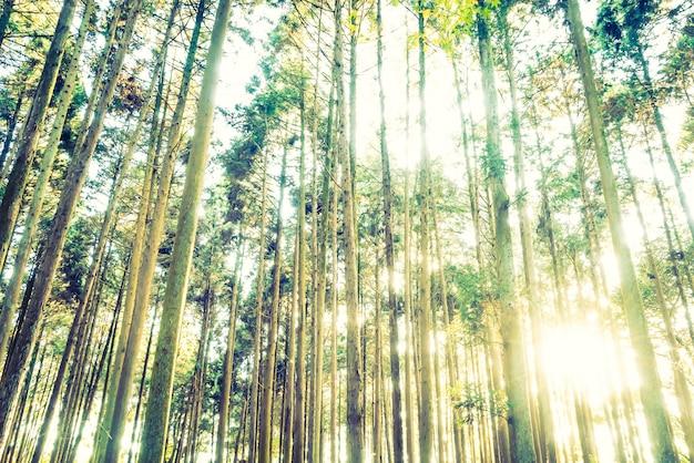 Forêt de jungle Photo gratuit