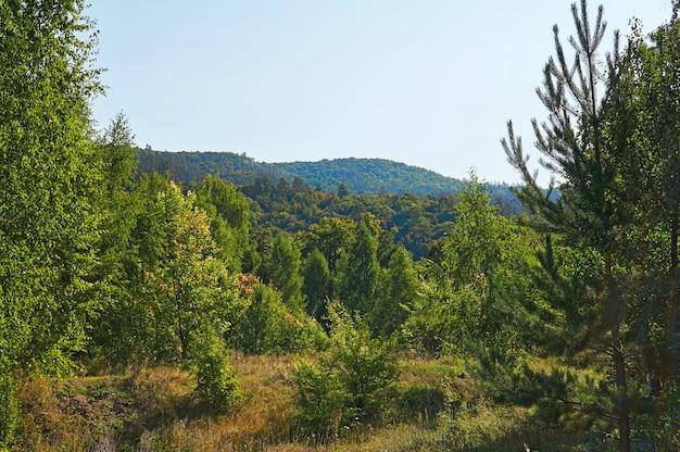 Forêt et montagnes avec un ciel bleu. zone de conservation forestière. Photo Premium