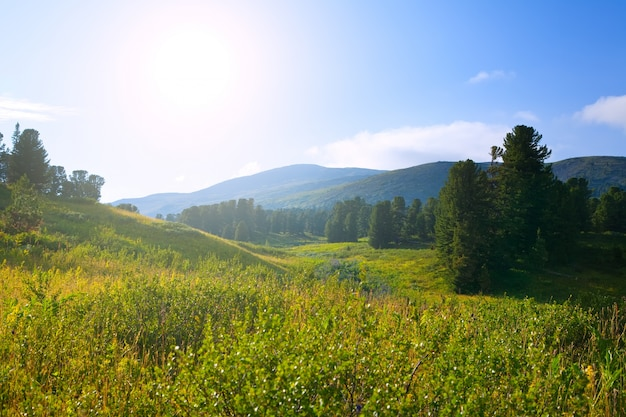 Forêt Des Montagnes En Journée Ensoleillée Photo gratuit