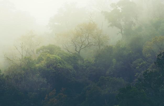 La forêt des montagnes tropicales en thaïlande Photo Premium