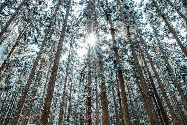 Forêt de neige au japon Photo gratuit