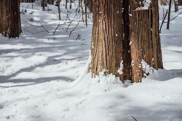 Forêt De Neige Au Sanctuaire De Togakushi, Japon Photo gratuit