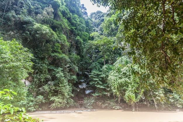 Forêt avec passerelles et rivière Photo Premium