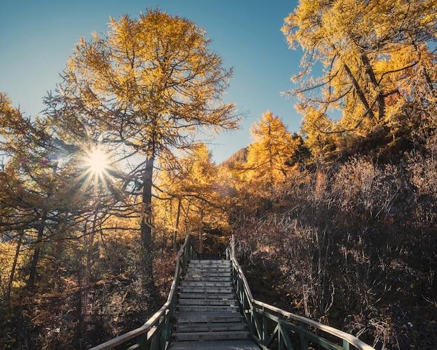 Forêt de pins en automne avec un ciel bleu dans la vallée de la réserve naturelle de yading Photo Premium