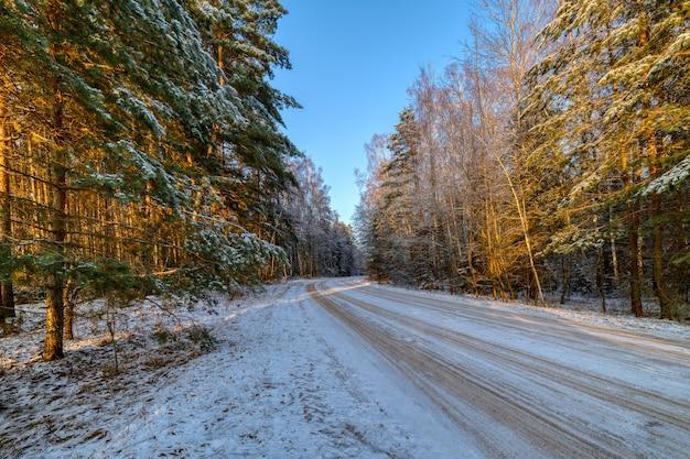 Forêt De Pins, Journée Ensoleillée D'hiver. La Route Traverse La Forêt Photo Premium